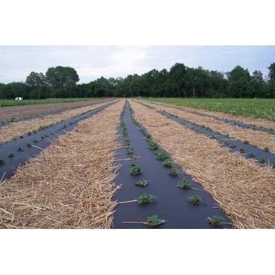 Agrowłóknina dwustronna 50g/m2 1,6x50m brązowo-czarna - Domek Ogrodnika