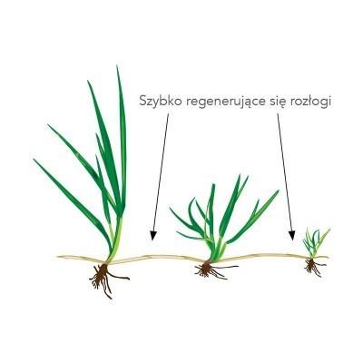 Uniwersalne Nasiona Traw Trawa Barenbrug Green Universal 5kg