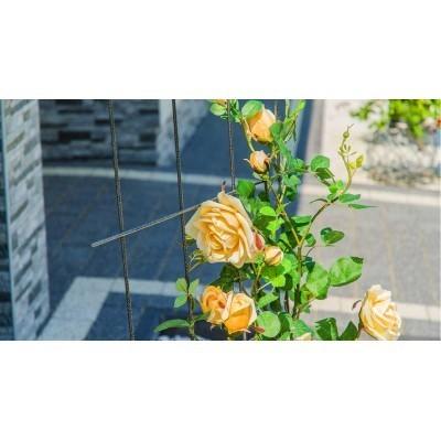 Krata na pnącza, rośliny wysokość 45x150cm stal ELGarden