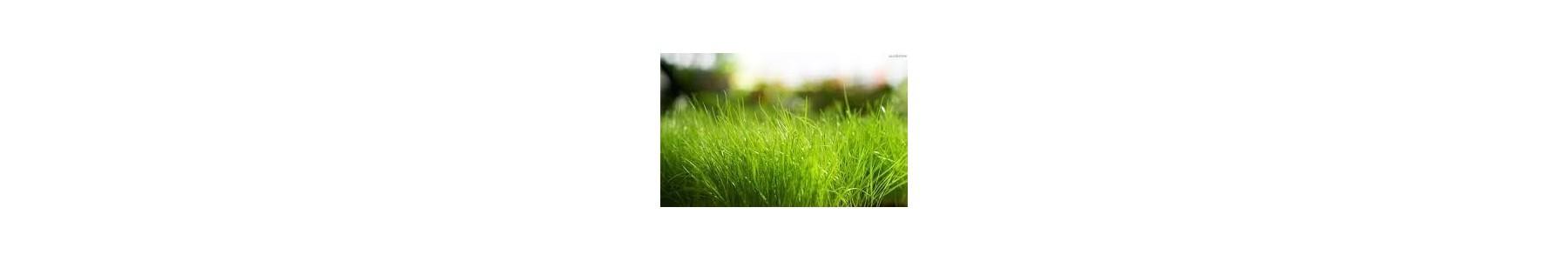 Odporne na susze nasiona traw - Trawa Barenbrug