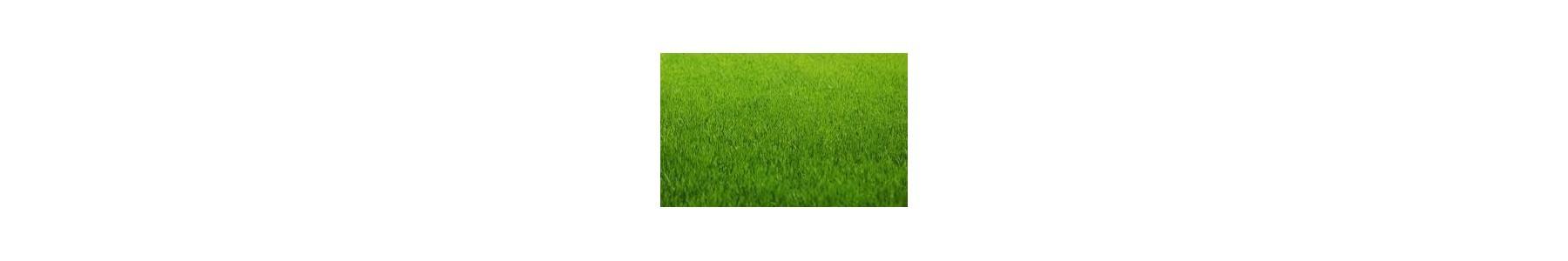 Uniwersalne nasiona traw - Trawa Barenbrug