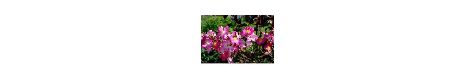 Nawozy do roślin kwitnących - wzrost i obfite kwitnienie