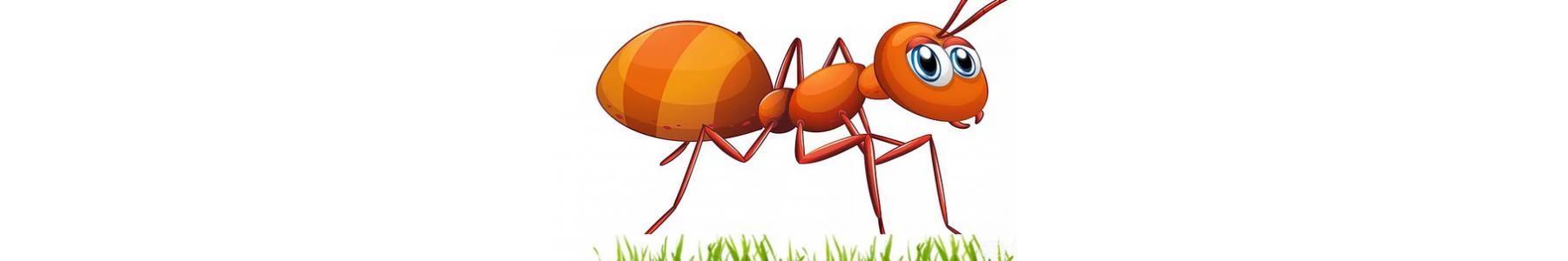Preparaty na mrówki